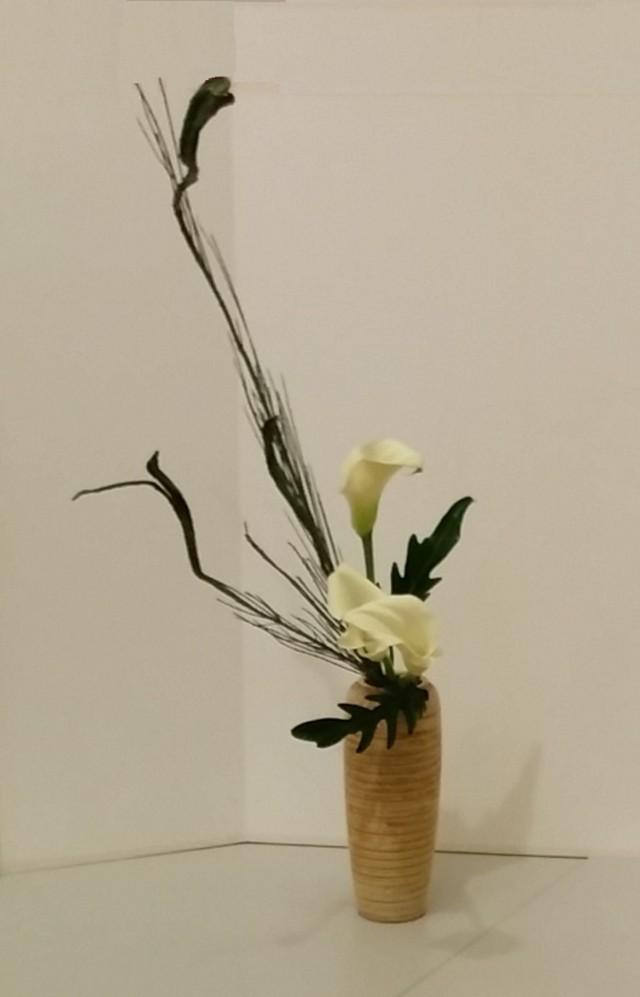 Japanse brem, Zantedeschia, Philodendron